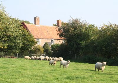 sheep house